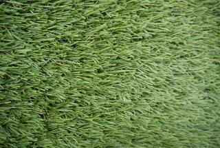 Stella Verde Domo Stella Verde